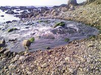 海岸に湧き水